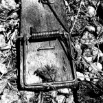 mousetrap-joice